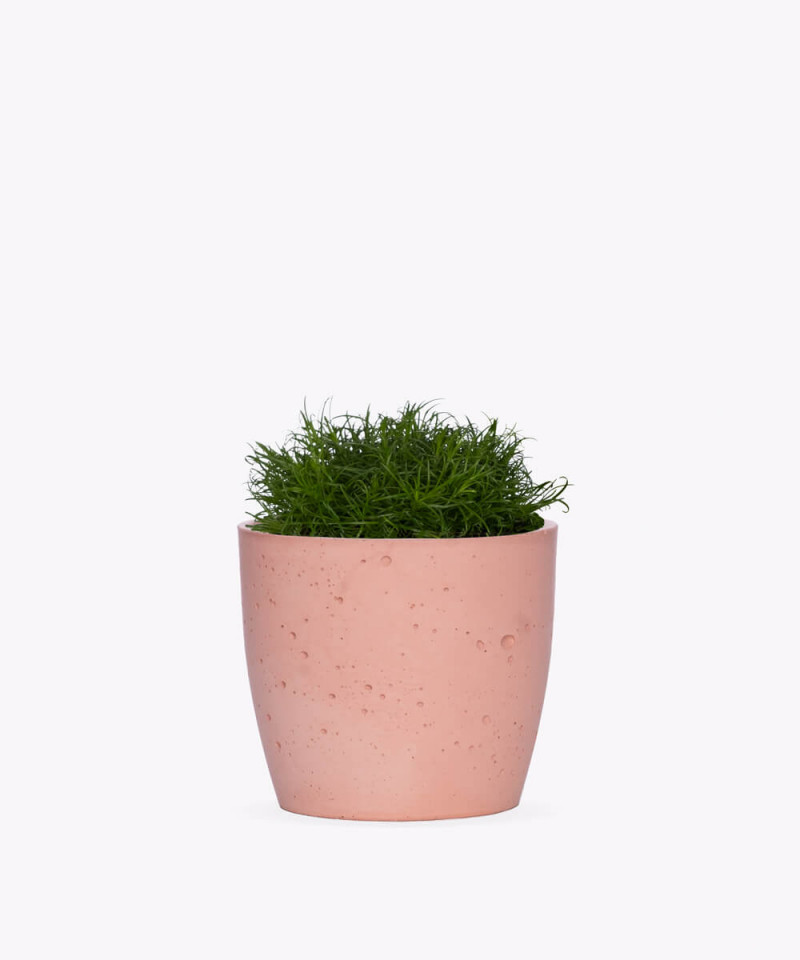 Karmnik rozesłany w różowej doniczce betonowej