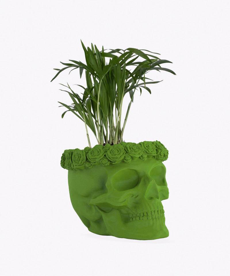 Chamedora Wytworna Mini w zielonej betonowej czaszce flower