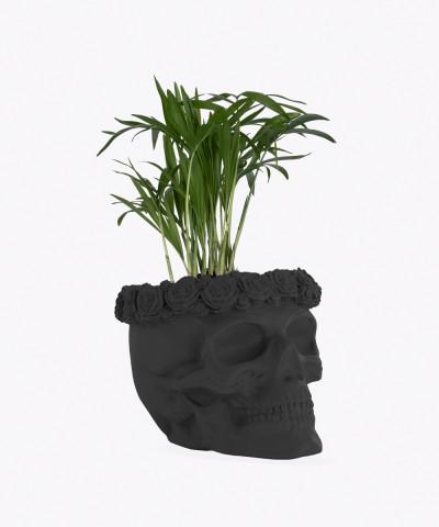Chamedora Wytworna Mini w czarnej betonowej czaszce flower