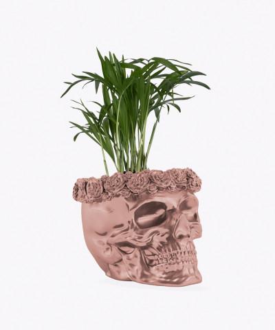 Chamedora Wytworna Mini w rose gold betonowej czaszce flower