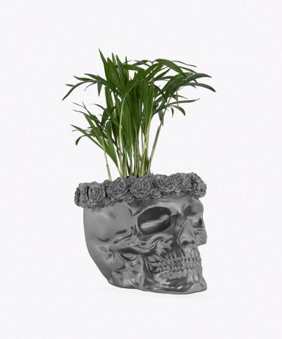Chamedora Wytworna Mini w stalowej betonowej czaszce flower