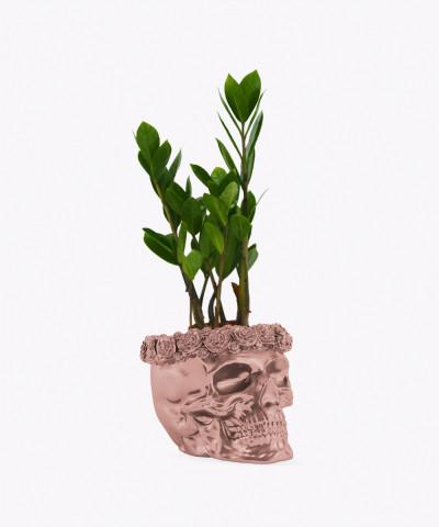 Zamiokulkas Zamiolistny Mini w rose gold betonowej czaszce flower