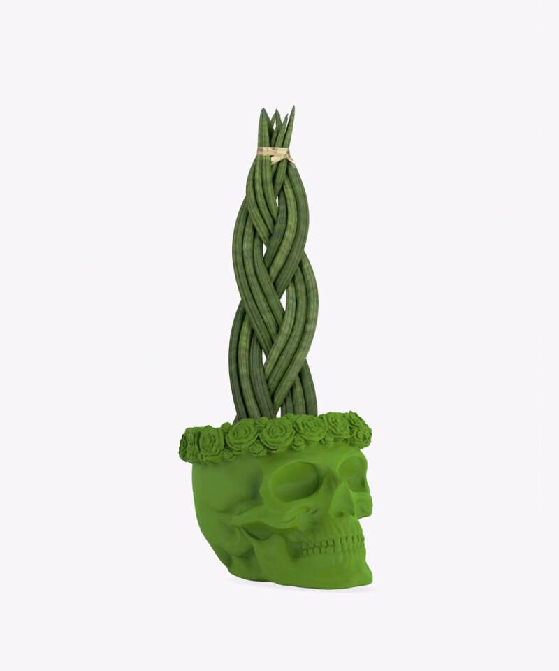Sansewieria Cylindryczna Warkocz w zielonej betonowej czaszce flower