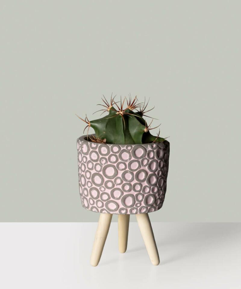 Kaktus w doniczce ceramicznej - MIX