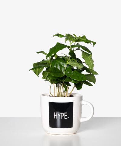 Coffea Arabica doniczka z napisem