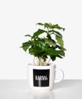 Coffea Arbica (Karma)