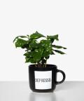 Coffea Arbica (Depresso)