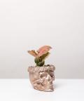 Syngonium Neon Robusta, w rose gold czaszce flower