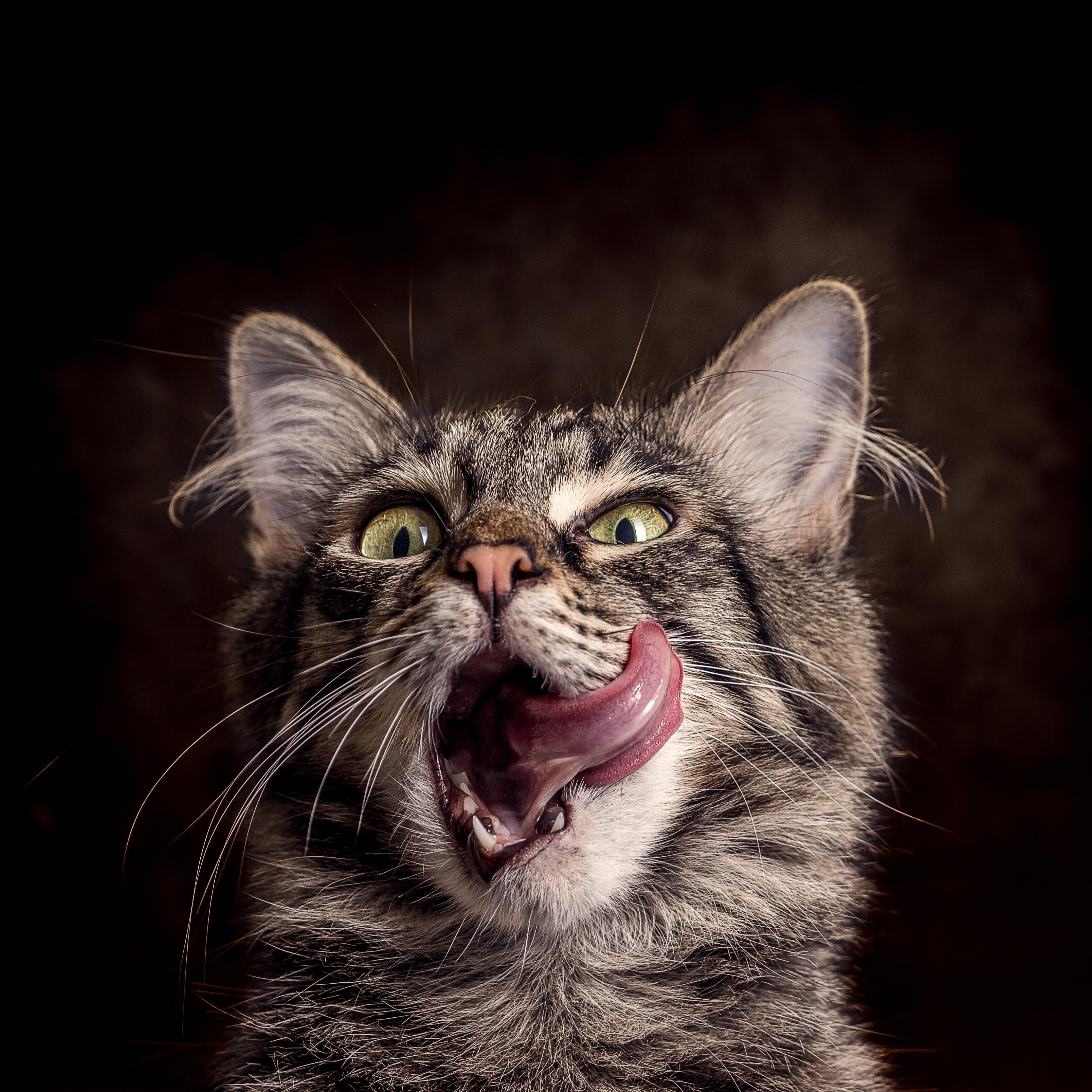 Koty W Bajkach Polkipl